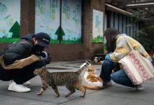 """صورة خبراء صينيون يكشفون عن إصابة قطط مدينة """"ووهان"""" بفيروس كورونا.. على ماذا يدل ذلك؟"""