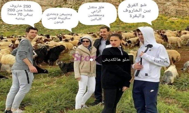 عائلة الأسد وقطيع الأغنام