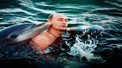 صورة صحيفة أمريكية: روسيا أحضرت دلافين مدربة إلى طرطوس لتنفيذ مهام استخباراتية في سوريا..!