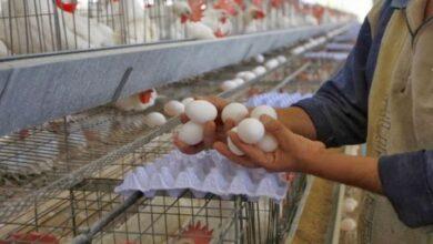 صورة بالتزامن مع طوابير البيض في لبنان.. سعر البيضة الواحدة في دمشق يصل لأرقام قياسية!