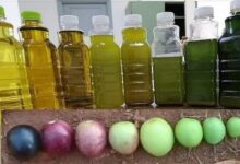 """صورة """"الذهب الأخضر"""".. إليكم كيفية اختيار زيت الزيتون الجيد وأنواعه المختلفة وبعض النصائح والتحذيرات!"""